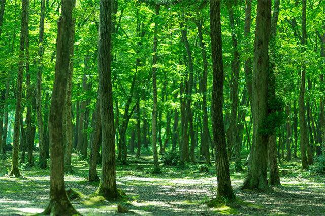 森をたずねる木育ワークショップ